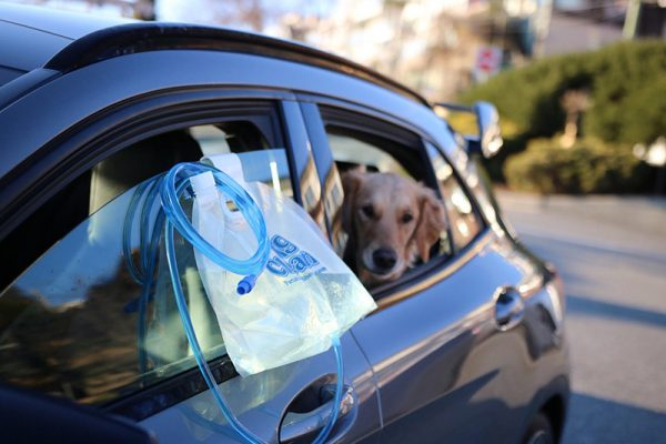 The portable dog shower easily hangs from a car door window to clean your dog's dirty paws on the go.