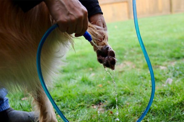 It is easy for this mobile dog wash to gently rinse your dog's paws.