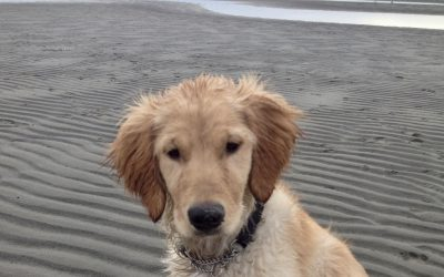 7 Things Your Beach Dog Wants You To Know
