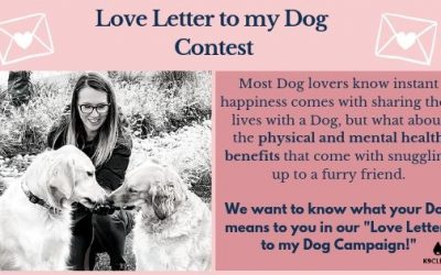 Dogs and Mental Health, Love Letters to My Dog Contest