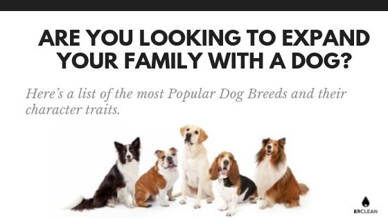 Are you looking to expand your family with a Dog_