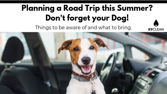 Planning a Road Trip with your dog this Summer?