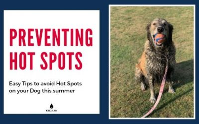What are hot spots on dogs & how to do you treat them?