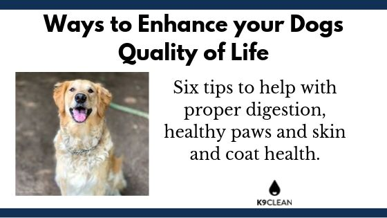 How to keep your dog healthy at home