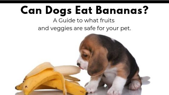 Dog-Friendly Fruits and Vegetables