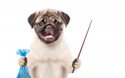 5 ways to reduce your Dog's Environmental Impact