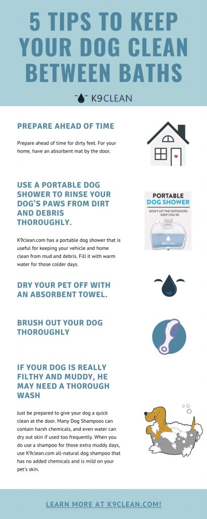 5 tips to keep your dog clean infographic
