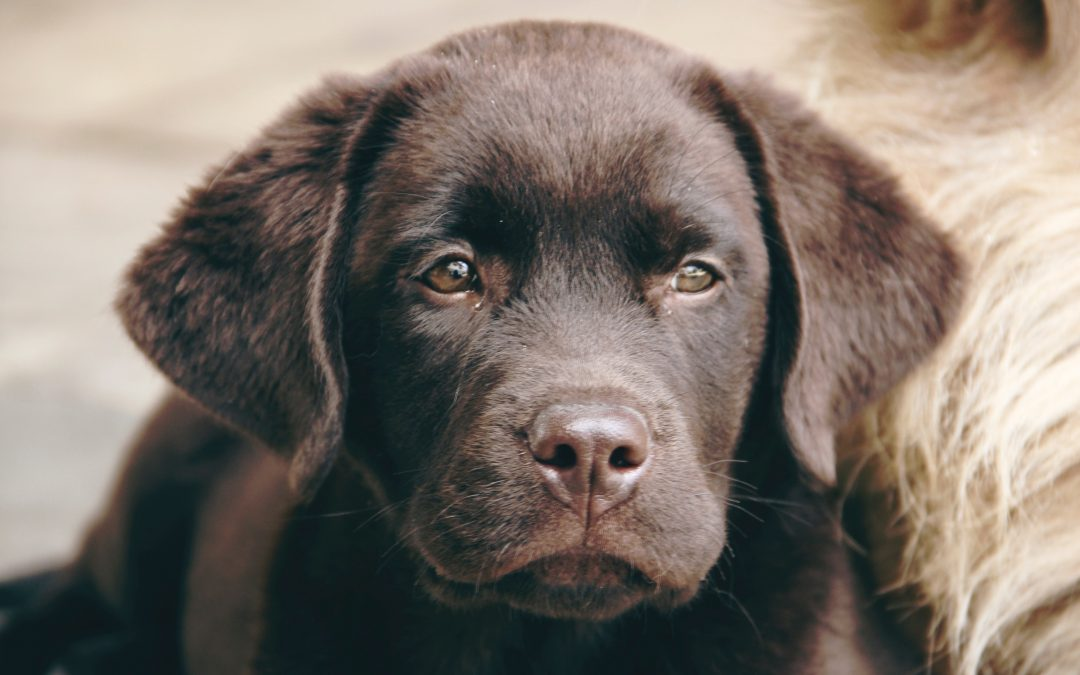 What dog owners should know about the coronavirus